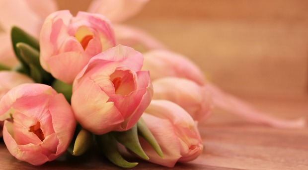 tulips-2068692_1920